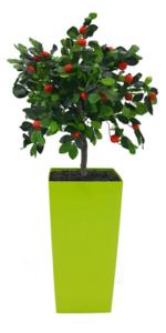 צמחי-משי_צמחים-מפלסטיק